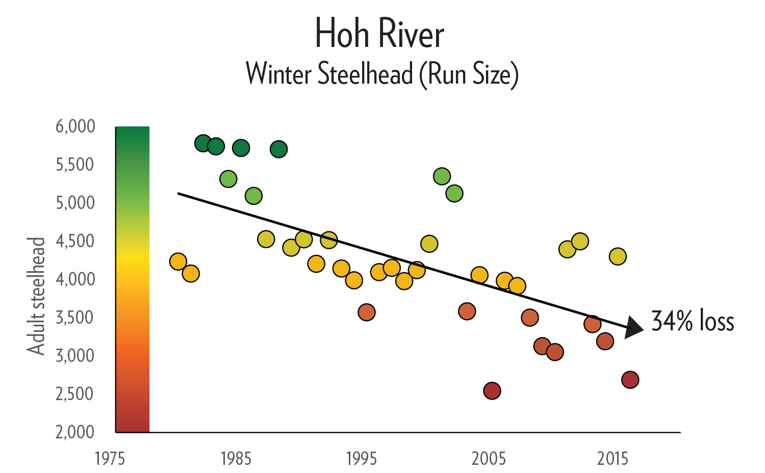 Hoh River Steelhead Decline