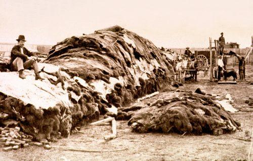 Buffalo Skins Pile